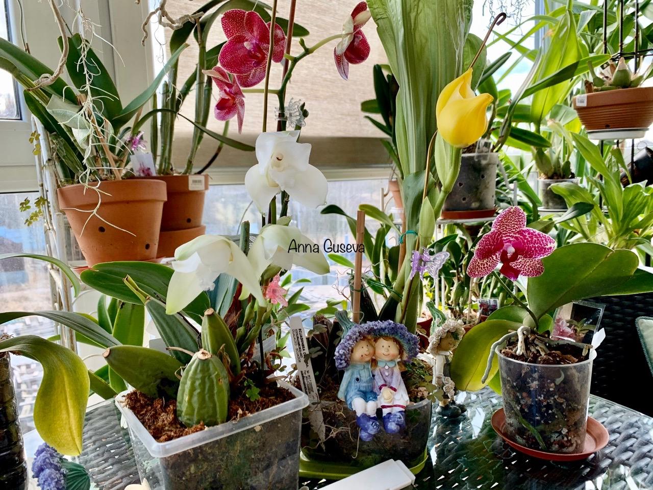 Известные коллекционеры орхидей 1
