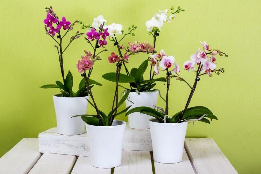 Известные коллекционеры орхидей