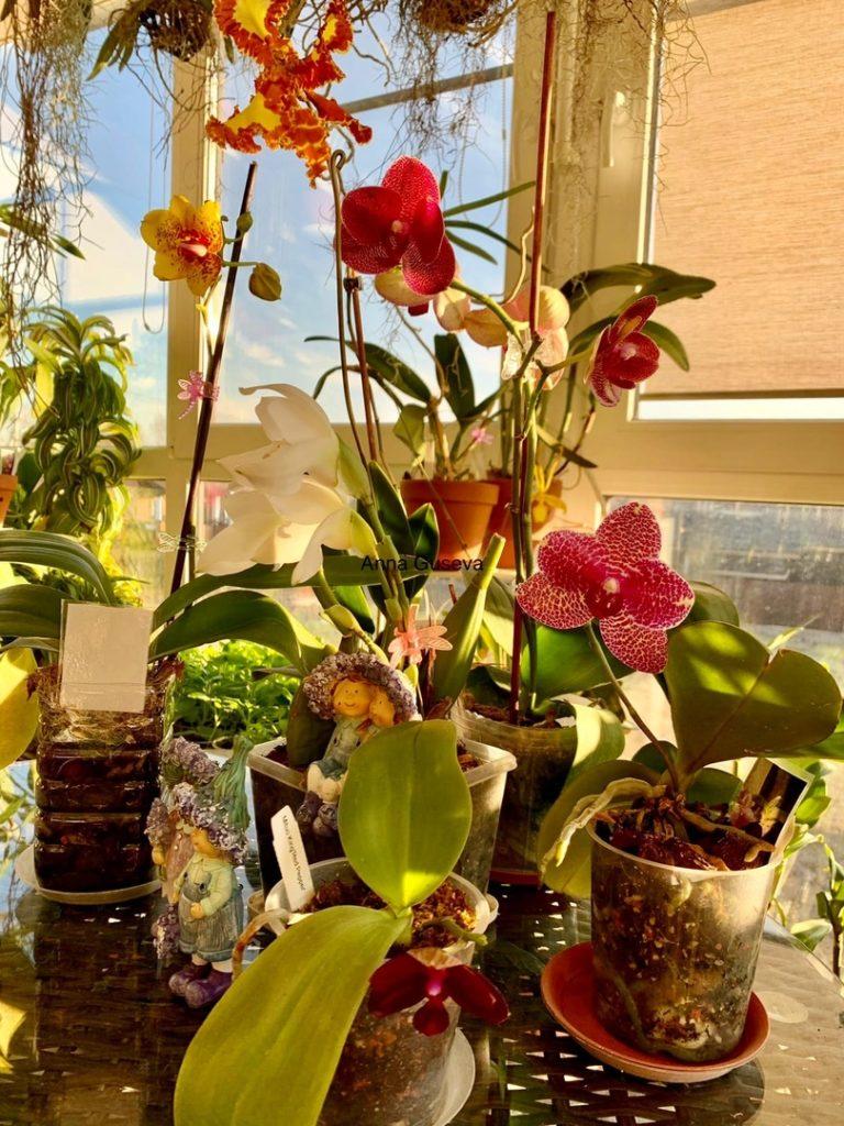 Орхидейная лихорадка 1