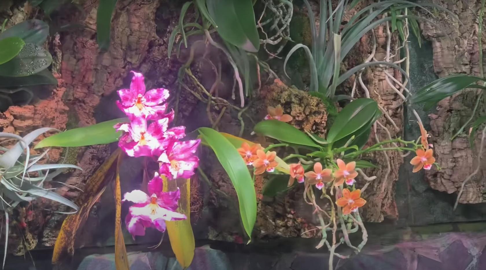Коллекция орхидей Ленинградского зоопарка