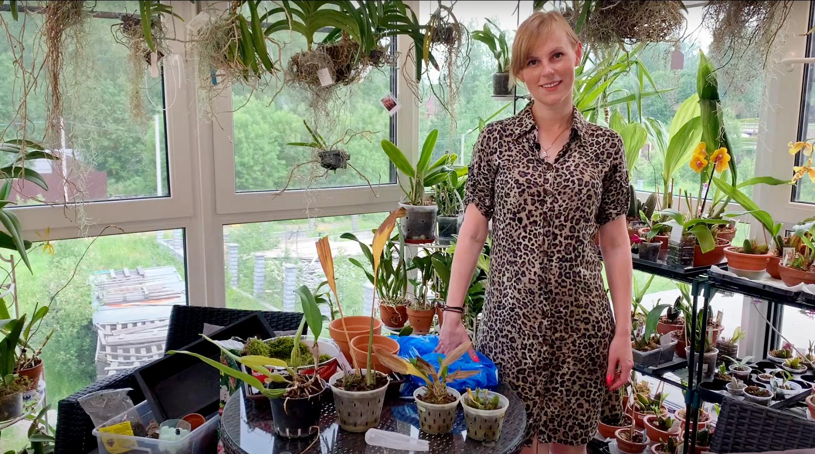 Посадка новых орхидей, посадка орхидей на блок
