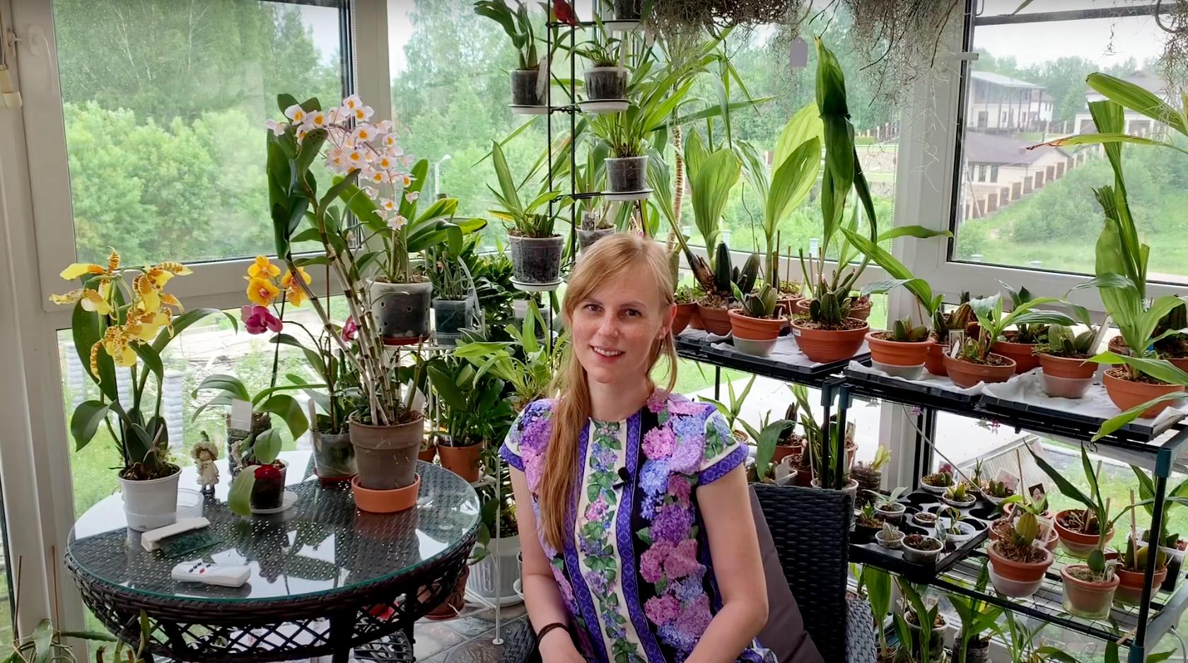 Орхидея Dendrobium Amabile