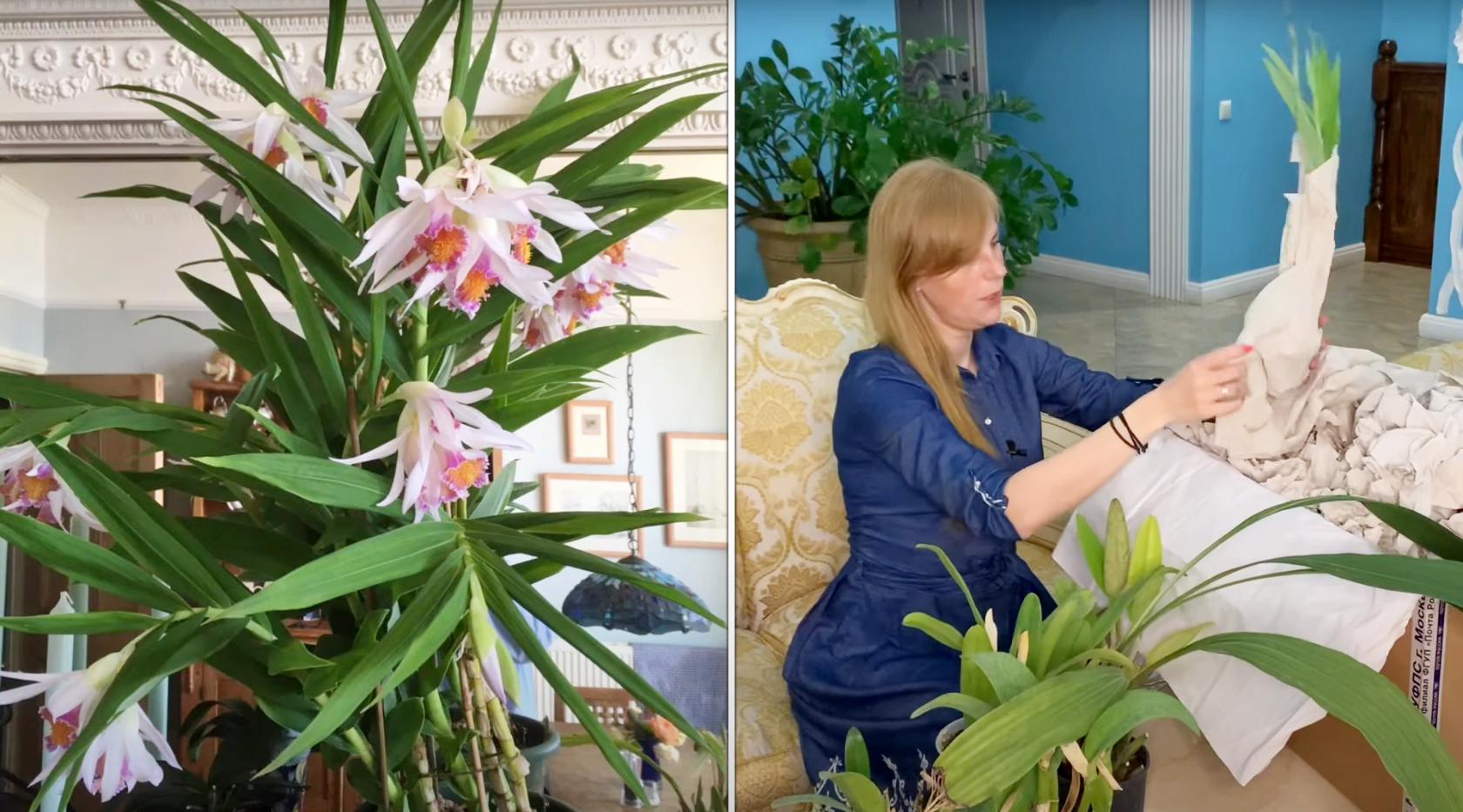 Распаковка орхидей — каттлейное безумие
