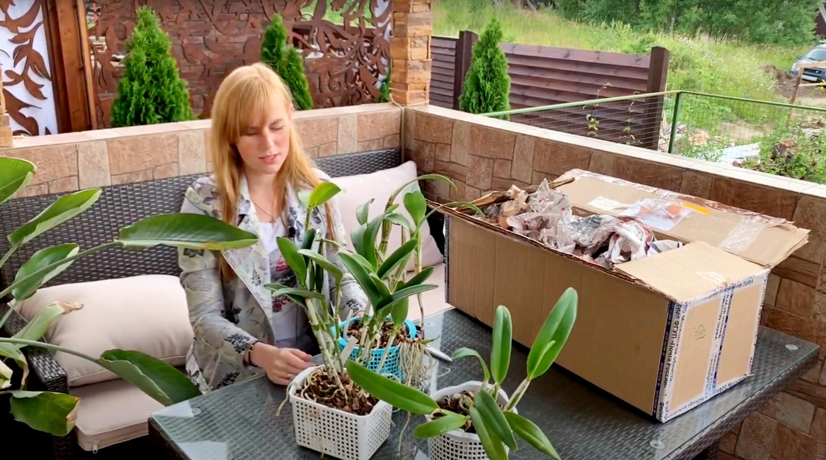 Распаковка орхидей. Приехали новые Каттлеи