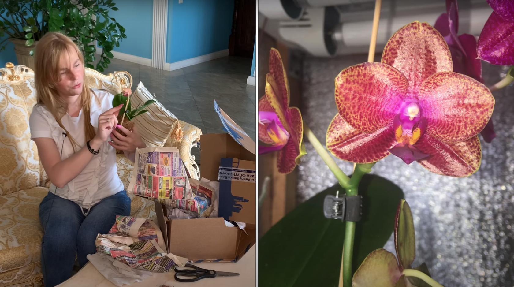 Распаковка орхидей: новые Фаленопсисы