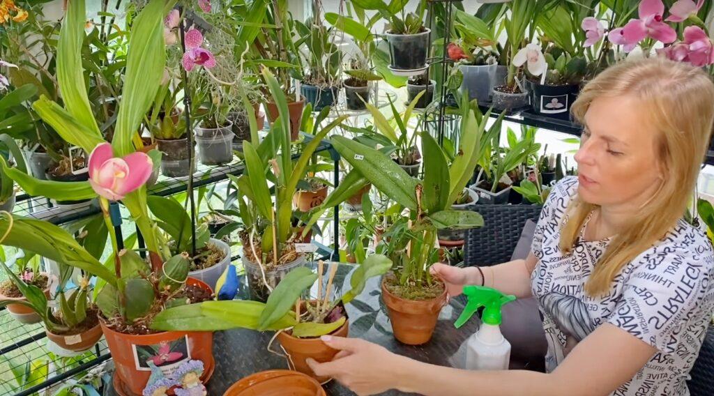 Большой орхидейный сюрприз