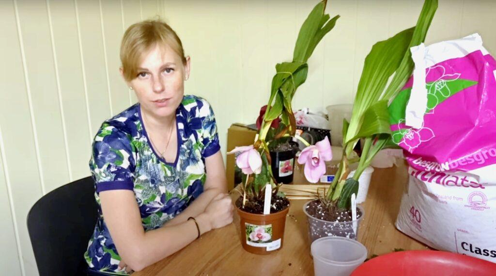 Посадка орхидеи Lycaste: свежий импорт орхидей