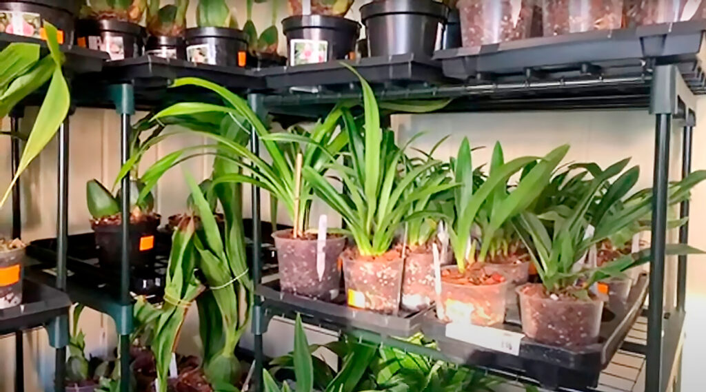 Обзор орхидей в магазине